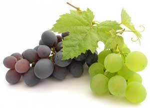 Виноград: выращивание и уход. Виноград в открытом грунте
